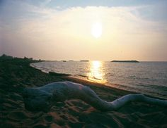 Driftwood rests on sand in the foreground of a sunset at Presque Isle State Park, Pennsylvania.