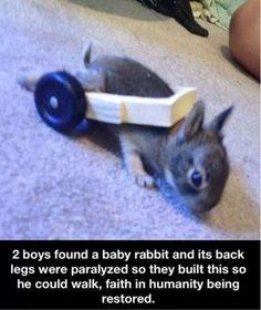 Boys help a baby rabbit