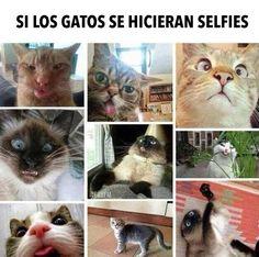 Los selfies perdidos