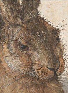 DURER, Albrecht German Northern Renaissance (1471-1528)_Hare (or Field Rabbit) detail