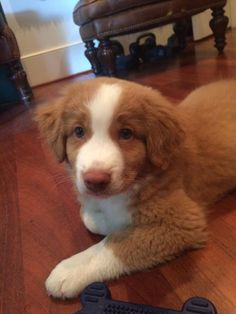 My first puppy!! http://ift.tt/2pBq4FW