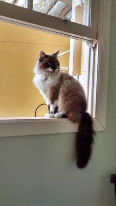 Mel na janela