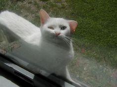 My future angel kitty!