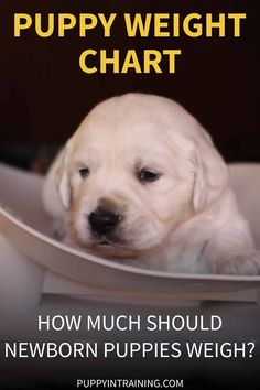 Puppy Weight Chart - How Much Weight Should A Newborn Puppy Gain Per Day? - That Mutt - Puppy Weight Chart - How Much Weight Should A Newborn Puppy Gain Per Day? Puppy Weight Chart - How Much Should Newborn Puppies Weigh? Newborn Puppy Care, Newborn Puppies, Emergency Vet, Weight Charts, Puppy Training Tips, Dog Care Tips, Pet Care, Large Dog Breeds, Small Puppies