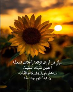Morning Texts, Have A Blessed Day, Instagram Images, Instagram Posts, Arabic Quotes, Poetry, Motivationalquotes, Good Morning, Photography