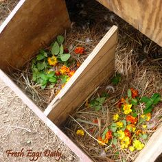 List of Herbs and Benefits - Toss a few handfuls of mixed cut herbs into your nesting boxes and refresh them as needed. Your chickens will benefit from them and you will enjoy how nice your coop smells.