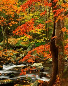 Little River in the Great Smoky Mountains National Park, TN