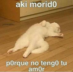 Top 5 cats in 2019 All Meme, Stupid Funny Memes, Animal Memes, Funny Animals, Romantic Memes, Cute Love Memes, Pinterest Memes, Spanish Memes, Wholesome Memes