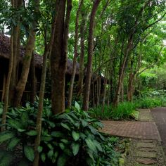 Our tree lined cottages in Forest Club