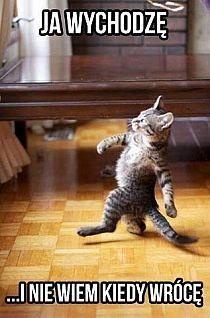 Funny Animal Memes, Funny Cats, Funny Animals, Cute Animals, Funny Memes, Meme Meme, Stupid Funny, Funny Quotes, Happy Birthday Dad Meme