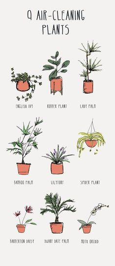 1000 Wohnideen wie 9 Air-Cleaning Plants Your Home Needs