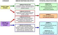 The Short-Term Stress Response – Mother Nature's Mechanism for Enhancing Protection and Performance Under Conditions of Threat, Challenge, and Opportunity Acute Stress, Chronic Stress, Stress On The Body, Limbic System, Signs Of Stress, Gene Expression, Effects Of Stress, In Vivo, Coping With Stress