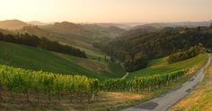 """Die Einzellage """"Hochsulz"""" des Weinguts SKOFF ORIGINAL Vineyard, Country Roads, The Originals, Outdoor, Outdoors, Vine Yard, Vineyard Vines, Outdoor Games, The Great Outdoors"""