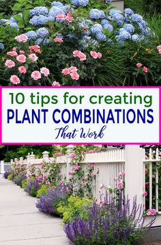 Flower Garden These tips for creating plant combinations in your yard will help make your garden landscaping look beautiful. Great ideas for updating your garden design with beautiful flowers, bushes and perennials. Plants, Beautiful Gardens, Plant Combinations, Planting Flowers, Amazing Gardens, Gardening For Beginners, Beautiful Flowers Garden, Garden Landscaping, Creative Gardening