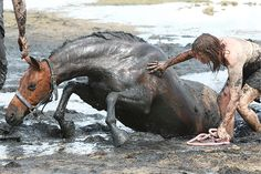 A horse gets stuck up to his neck in mud on a beach as the tide rises. His owner, Nicole Graham, who was enjoying an afternoon ride, stayed with him as rescuers struggled for three hours to pull him out. With moments to spare, the 500kg horse, named Astro, was freed with the help of a tractor and harness at Avalon Beach in Geelong, Victoria, Australia