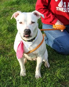 Journey6 mos at intake. A Buddy For Life, Inc. 377 Hutton Road Elkton, MD 21921 410-392-0000  Shelter is closing on June 30th. If they don't get out now, they get out in a garage bag.  Now or never. No time to wait.
