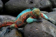 Galapagos-saaret