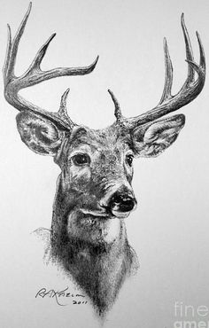 Would love this beautiful sketch of a stag displayed in a frame hanging in my lounge.