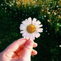 """@simplewonderings's photo: """"All hail the little flowers."""""""