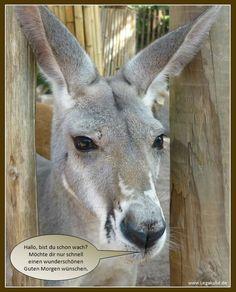 Sie finden auf dieser Seite lizenzfreie, weil von mir selbst fotografierte und verschönerte Bilder, kostenlos zum Download. #animal #cute #sweet #funny #nice #animelpicture   #naturephotography #Esel
