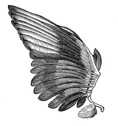 Vintage Clip Art Image - Feather Wings - For Angels - The Graphics Fairy