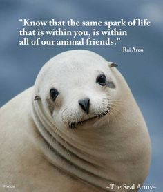 """Know that the same spark of life that is within you, is in all of animal friends."" - Rai Aren #vegan"