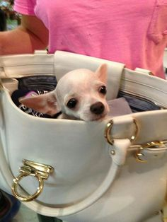 I have a teacup chihuahua that I wanted so I could put her in my purse and take her to the store.