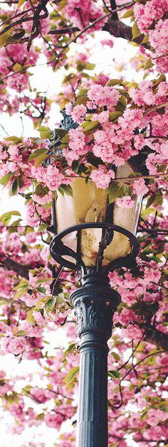 Springtime in Paris   France