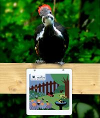 a young pileated woodpecker and Backyard Habitat Certification sign Canadian Wildlife, Extinct, Dream Garden, It's Easy, Bats, 20 Years, Habitats, Something To Do, Butterflies