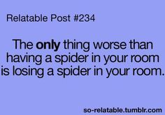 The only thing worse than having a spider in your room is losing a spider  in your room.