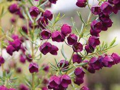 Name Symbols, Backyard Trees, Cut Flower Garden, Garden Nursery, Trees And Shrubs, Plant Design, Cut Flowers, Garden Inspiration, Evergreen