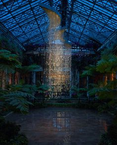These lights inside Longwood Gardens, Pennsylvania are stunning as it begins to get dark. - Imgur