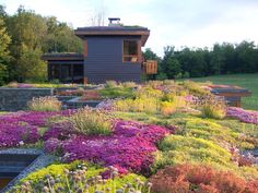 green roof, in New York, USA! The planted roof on three levels blends into the natural landscape and encourages the wildlife to creep in close to the house. Plants, Roof, Green Roof, Landscape Design, Green Roof House, Backyard Garden, Backyard Garden Layout, Backyard, Roof Garden