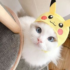 Cute cat with blue eyes with Pikachu hat on. Cute Cats And Kittens, I Love Cats, Cool Cats, Kittens Cutest, Cutest Pets, Funny Cat Videos, Funny Cats, Cute Baby Animals, Funny Animals