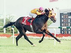 Mecke(1992)Maudlin- Beautiful Bid By Baldski. 5x5 To Nasrulah. Full Brother To Beautiful Pleasure. 40 Starts 12 Wins 7 Seconds 9 Thirds. 2,470,550. At 3, Won Super Derby (G1), At 4, Mecke Won Arlington Million(G1), Turf Classic(G1). Died 2013 At Age Of 21.