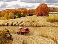 http:// Autumn Photos | Autumn Corn Harvest Cadillac Michigan wallpapers and stock photos
