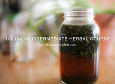 Intermediate Herbal Course: Online Herbal Course - your online doorway into the wild and wonderful world of plant medicine. Learn Herbalism Online! #learnherbs #herbalism