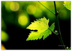 Green Light by Celalettin Güneş on 500px