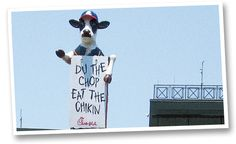 Chick-fil-A: Campaign History 2006 The cows enter the big leagues Chik Fil A Cow, Cow Wallpaper, Eat More Chicken, Funny Cows, History, Costume Ideas, Campaign, Community, Group