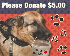 Blount County SPCA in Tennesse ~  We are a small unit of 4 animal cruelty investigators and we are volunteers. Donations keep us going so if you'd like to help out, there are several ways to do it http://www.blountcountyspca.org/