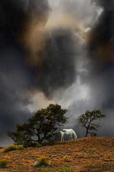 4263 - Horse and Storm in a fields | by peter holme iii on 500px