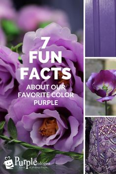 After writing about 7 unique purple facts, we now present 7 fun purple facts!