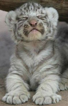 Zoo Animals – Cute Animals – Funny Animals – An Amazing Zoo Trip, Cute Baby Animals, Animals And Pets, Funny Animals, Wild Animals, Funniest Animals, Zoo Animals, Big Cats, Cats And Kittens, Cute Cats
