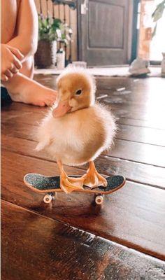 duckie on a skateboard