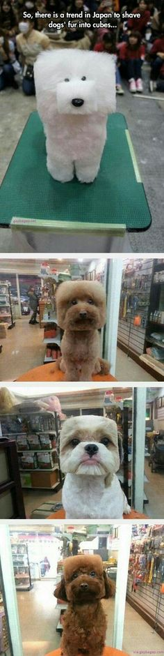 Funny Memes About Shaved Dogs in Japan