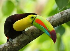 Toucans, Flycatchers and Woodpeckers – A Birder's Paradise in Honduras