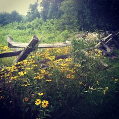wild flowers in virginia