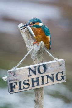 Colorful birds - Kingfisher bird - title Can't you read? **Cutest little rebel…
