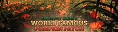 Bates Nut Farm in Valley Center...pick your own pumpkin patch and so much more!