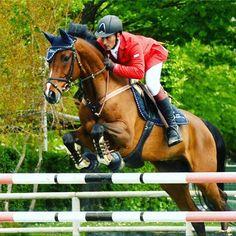 https://100x100aloevera.wordpress.com/2017/06/08/laloe-per-i-nostri-amici-cavalli/ #cavalli #salutecavalli #horse #horses #aloevera #aloeforever #aloeveragel #aloeverasoap #aloeverapets #aloeverajuice #aloeveraplant (scheduled via http://www.tailwindapp.com?utm_source=pinterest&utm_medium=twpin)